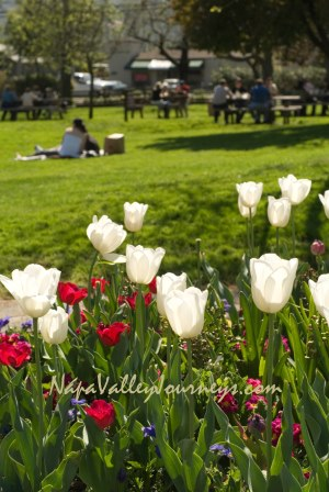 napa valley picnic