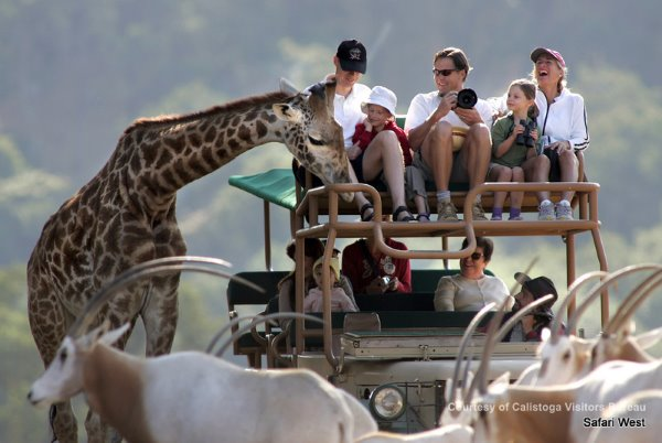 things to do in napa, safari west