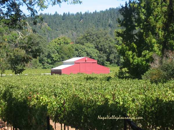 st. helena vineyard, napa valley