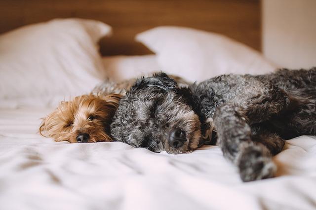 Napa Valley Pet-Friendly Hotels