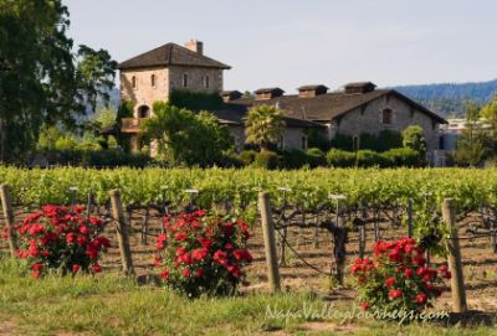 v sattui winery, v sattui vineyards, napa valley wineries